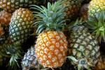 pineappleChoosing092811