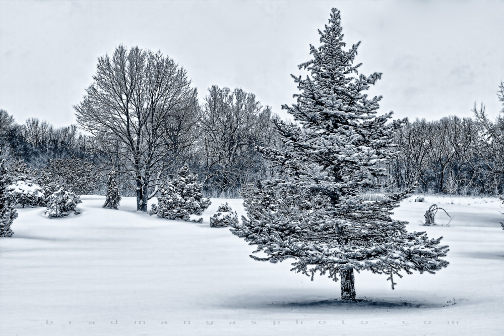 Big Shunga In Winter