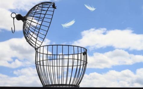 Stevan-Noronha-Freedom-Blog1